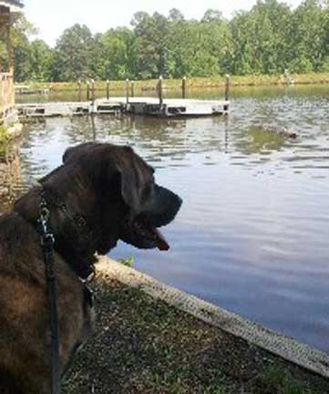 dog friendly raleigh-durham
